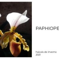 marins_paphiopedilum.pdf